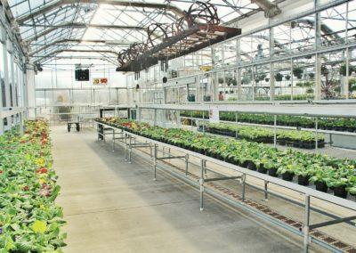 greenhouse-3247271_1280