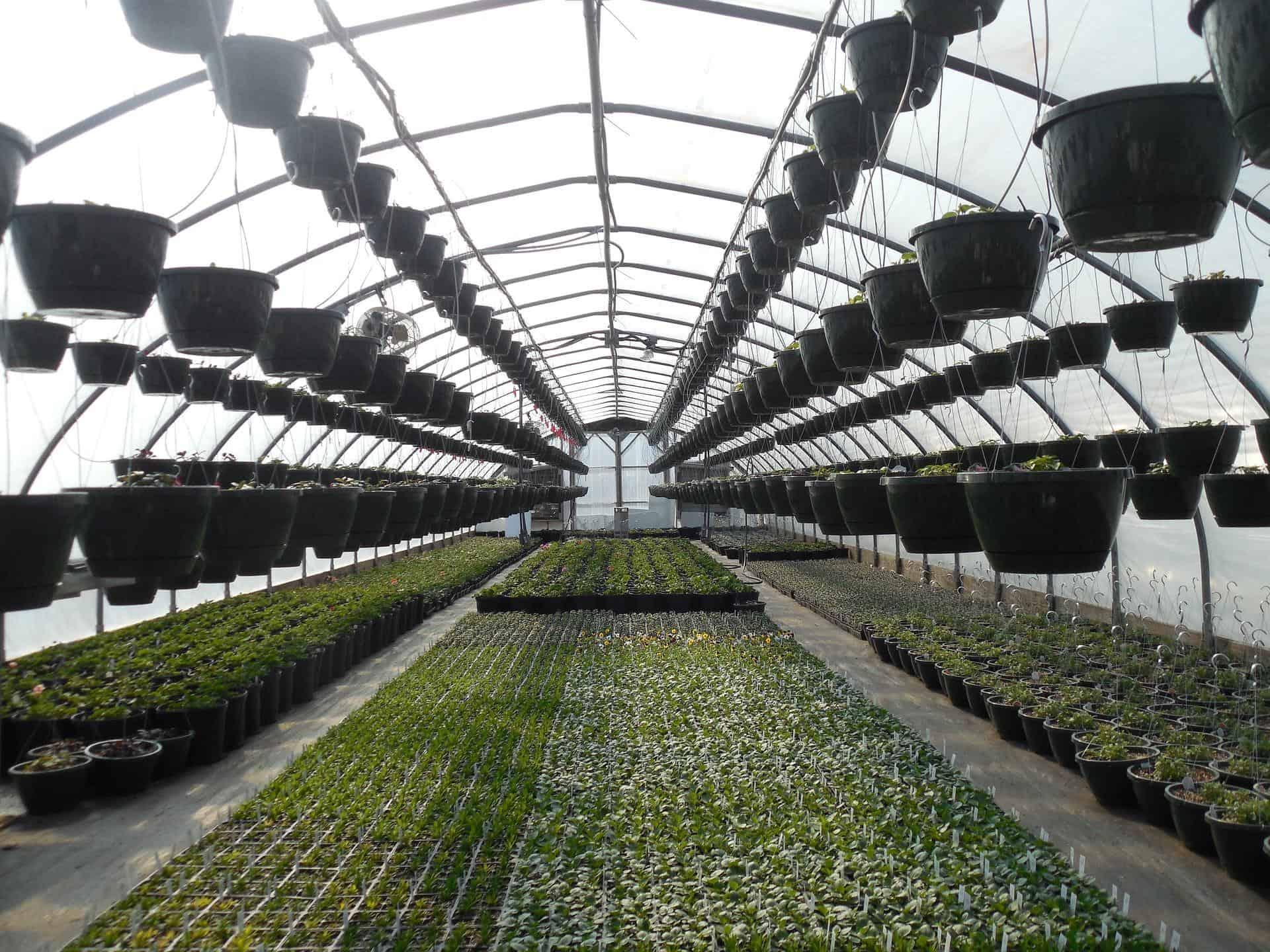 greenhouse 658452 1920 - AgroEcosun