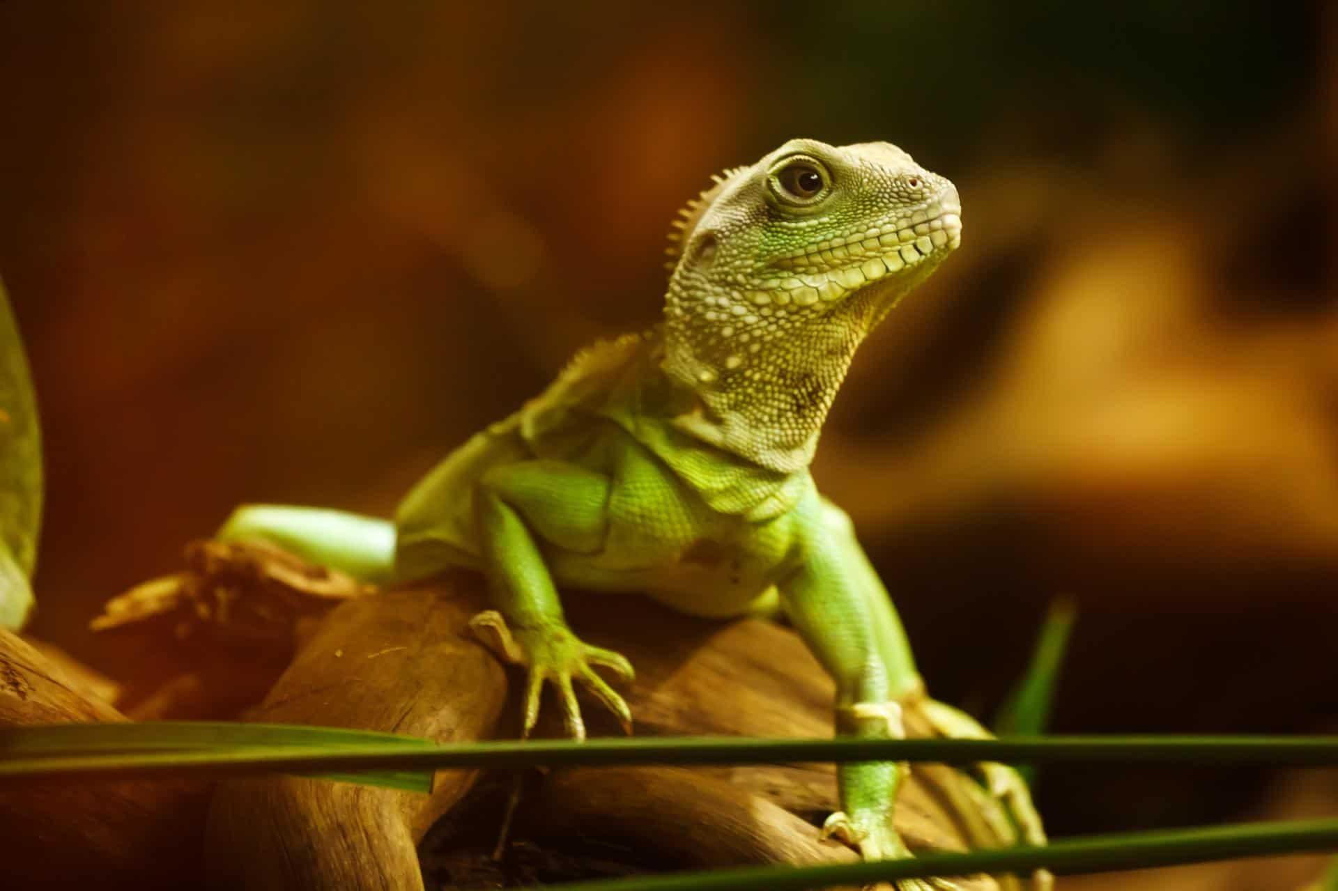 lizard 22258 1920 - AgroEcosun